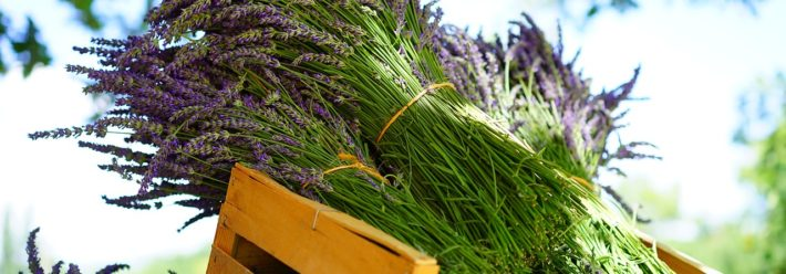 Plant Spirit Medicine: What It Is and How It Can Help You